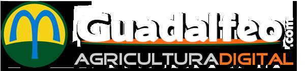 logo Guadalfeoblancosombra