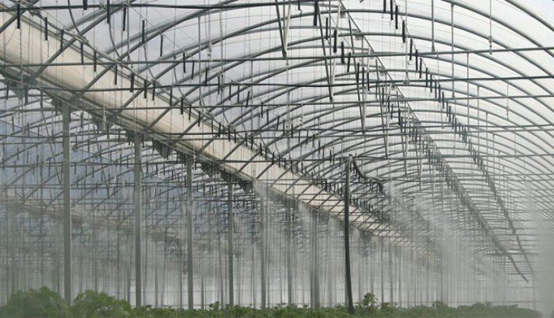 Medidas y ayudas a la agricultura del cultivo bajo plástico